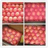 Buena calidad FUJI fresco dulce Apple