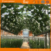 네덜란드 기술 농업 Venlo 유형 온실