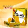 Poudre africaine d'enzymes de mangue du meilleur détox d'action