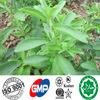 Steviaのエキス80%~98% Stevioside、40~98% Reba