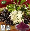 Extracto de la baya del saúco negra: ~ el 25% de las antocianidinas el 3% por ULTRAVIOLETA