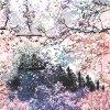 Tela de seda impressa Digitas da cópia da alta qualidade (SZ-0004)