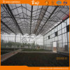 Planting Vegetables&Fruitsのための耐久のVenlo TypeマルチSpan Glass Greenhouse