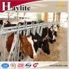 Headlock de travamento automático da vaca diária quente da venda para a exploração agrícola de gado