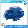 Bomba positiva de Vp para a cultura aquática com sustentação do ferro fundido/Brass/AISI304ss