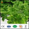 Pannelli artificiali della barriera della stuoia del Boxwood di buona qualità di Sunwing