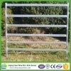 2.1m 6 het Ovale Sporen Gebruikte Comité van het Vee voor de Markt van Australië