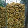 記憶のトウモロコシのための溶接された金網