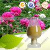 Extrait naturel Paeoniflorin d'Albiflora de Paeonia de produit de soins de santé