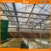 Serre chaude en verre à haute production avec le système de contrôle automatique d'environnement