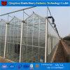 알루미늄 합금 직류 전기를 통한 강철 프레임 정원 온실