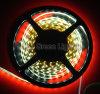 SMD LED 지구 빛