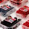Het milieuvriendelijke Beschikbare Plastic Dienblad van het Voedsel voor fruitvlees (het dienblad van pp)