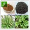Plantagoのエキス、アジアのオオバコのシードの粉、精液Plantaginis P.E.