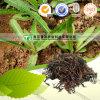 Alivio de la hierba de Cablin Potchouli del Verano-Calor