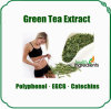 100% naturale e Low Price Green Tea Extract