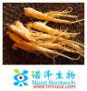 Le GMP fournissent l'extrait de fond de ginseng de 80% Ginsenosides