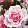 la fleur Pigment&Disperse de la rosée 100%Polyester a estampé le tissu pour le jeu de literie