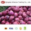 Chinesische frische purpurrote Zwiebel 2017