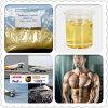 Testosterona Enanthate CAS dos esteróides do edifício do músculo da pureza de 99%: 315-37-7