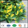 庭のためのSunwing New Design Nature Plastic Artificial Green Wall