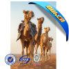 高品質3D Lenticular 3 D Posters