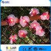 Comitato del Polysilicon della materia plastica con un Ni da 600 mAh--Lampada solare della batteria CD LED