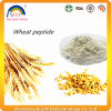 Poudre d'Oligopeptide de blé
