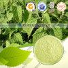 Высокий продукт естественное Oridonin здравоохранения Qualitu