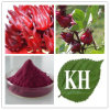 Roselle 추출, 목부용속의 식물 Sabdariffa 추출, Karkade 추출 CAS No.: 71149-61-6.