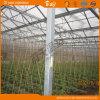 Vida-Span longa Venlo Type Greenhouse Covered por Glass