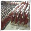 Las estatuas de fábrica personalizada de alta calidad de poli resina, estatuas católicas, estatuas religiosas (IO-ca_samples)