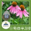 صاحب مصنع إمداد تموين صارّة طبيعيّ [إشنسا] [بوربورا] مقتطف 4% [شكريك] حامضيّة [إشنسا] مقتطف