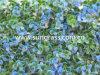 Трава стены Decrative искусственная для крытого и напольного украшения (SUNW-MZ00010)