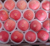 Comprar Fresh FUJI Apples con Export Price en China en Hot Sale<<FUJI, Qinguan. Gala. Estrella roja, abuelita Smith, señora rosada, Huaniu>>