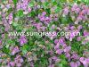 Grama artificial da parede de Decrative para a decoração interna e ao ar livre (SUNW-MZ00014)