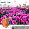 Garniture économiseuse d'énergie de refroidissement par eau pour la plantation de serre chaude d'orchidée de guindineau