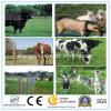 De hete Omheining van het Gebied van de Omheining van de Weide van de Landbouw van de Geit van de Omheining van het Metaal van de Verkoop