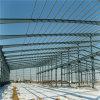 Taller de la estructura de acero (ZY191)
