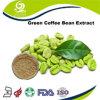 Polvere verde naturale pura dell'estratto dei chicchi di caffè di 100% con l'alta quantità da vendere