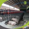 Système alimentant de disque à chaînes pour le porc de fini dans la ferme moderne