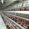 Ferme avicole Equipment pour Layers et Broilers