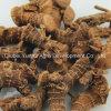Galangal chinês secado no bloco