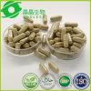 Cápsula natural de Hoodia do comprimido da perda de peso do OEM
