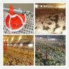 Equipamento de produção da galinha para a criação de animais (JCJX-119)