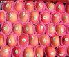 2015 nuevo FUJI red delicious fresco chino Apple