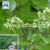 Curing High Blood Pressure를 위한 Dalbergia Wood Oil