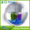vaso redondo acrílico da planta da flor do tanque da bacia dos peixes da montagem da parede do espaço livre do diâmetro de 15cm mini