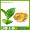 Migliori polifenoli 100% del tè verde di qualità di Nautral