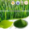 Producto al por mayor del cuidado médico del polvo de la hierba de cebada